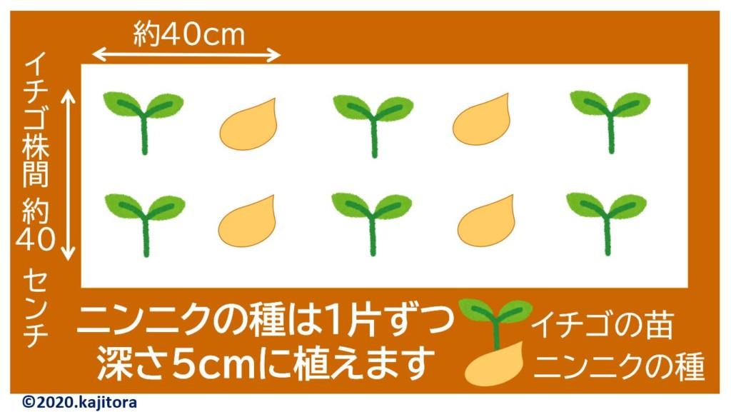 strawberry,garlic-1