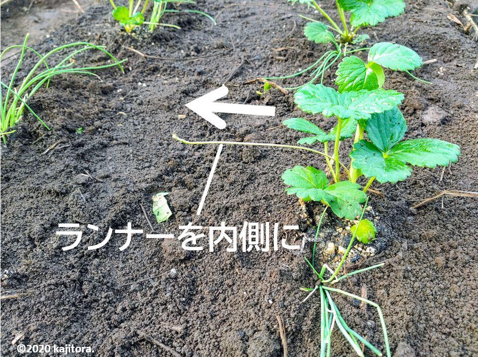 strawberry,negi_20200916-2r