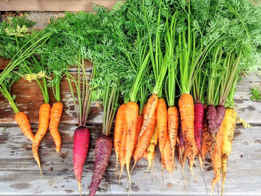 carrot-17