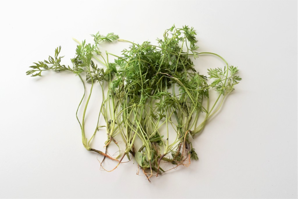 carrotspray,ninjinnoha (3)