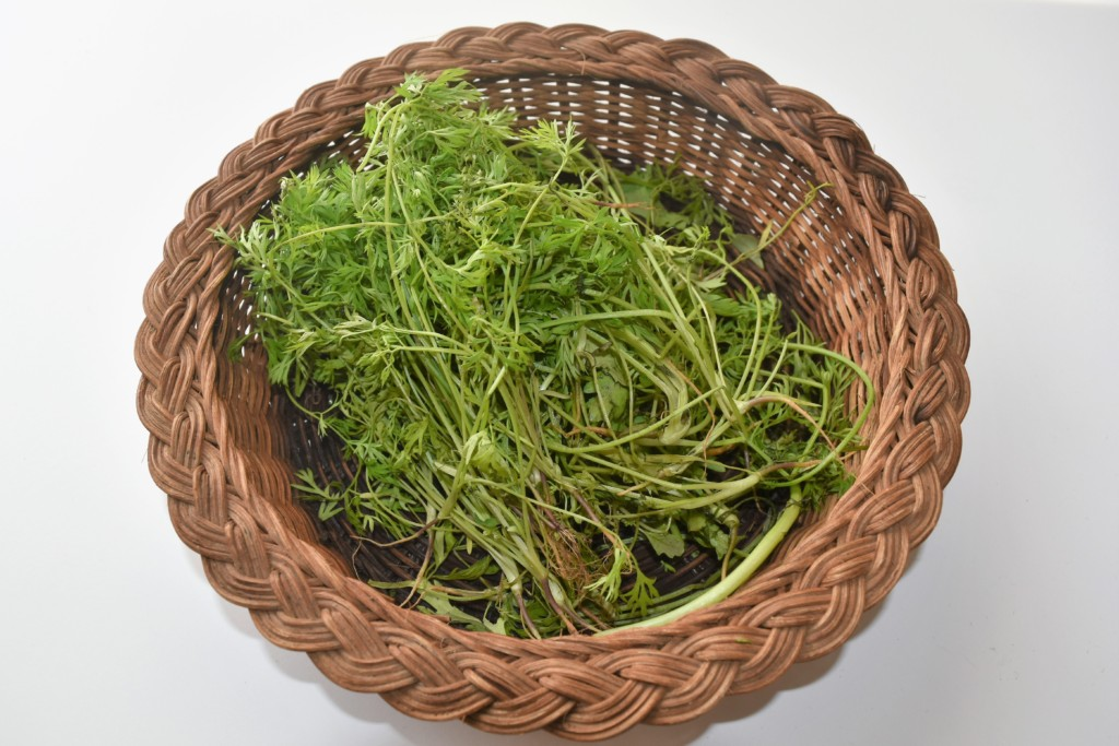 carrotspray,ninjinnoha (4)