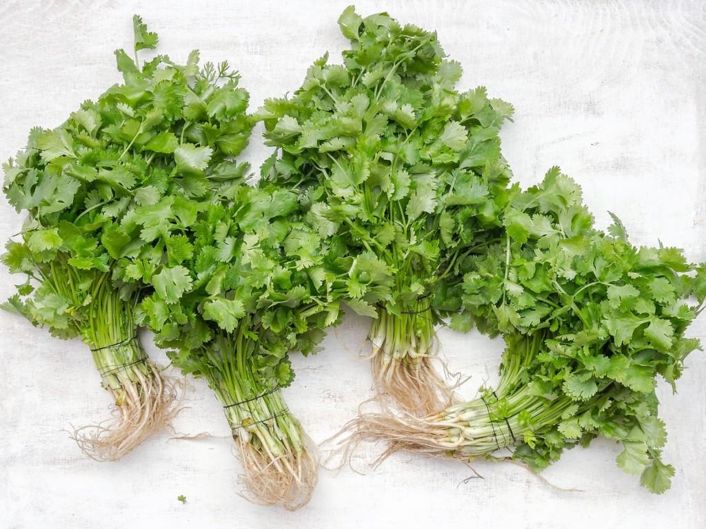 parsley,mitsuba,celery,coriander-2