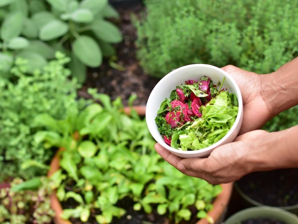 lettuce-104