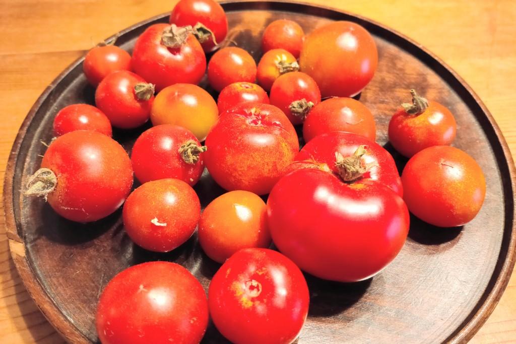 tomato,over the winter_20201230-2