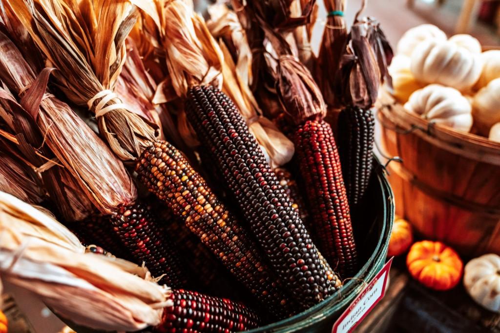 corn-14