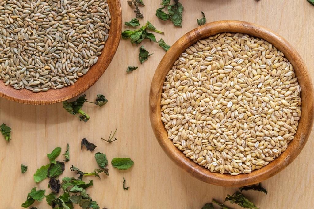 pearl-barley,oomugi