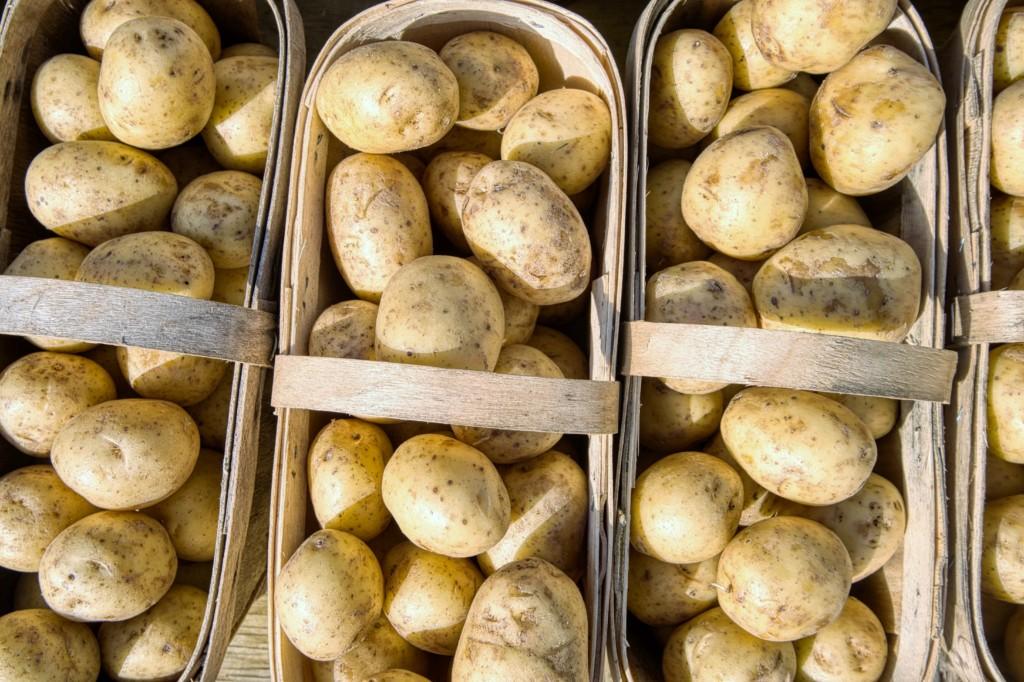 potato-12