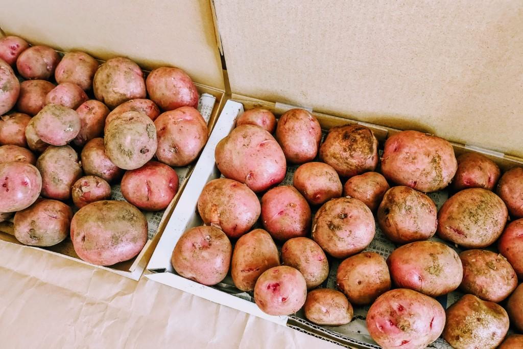 potato,Andes (5)