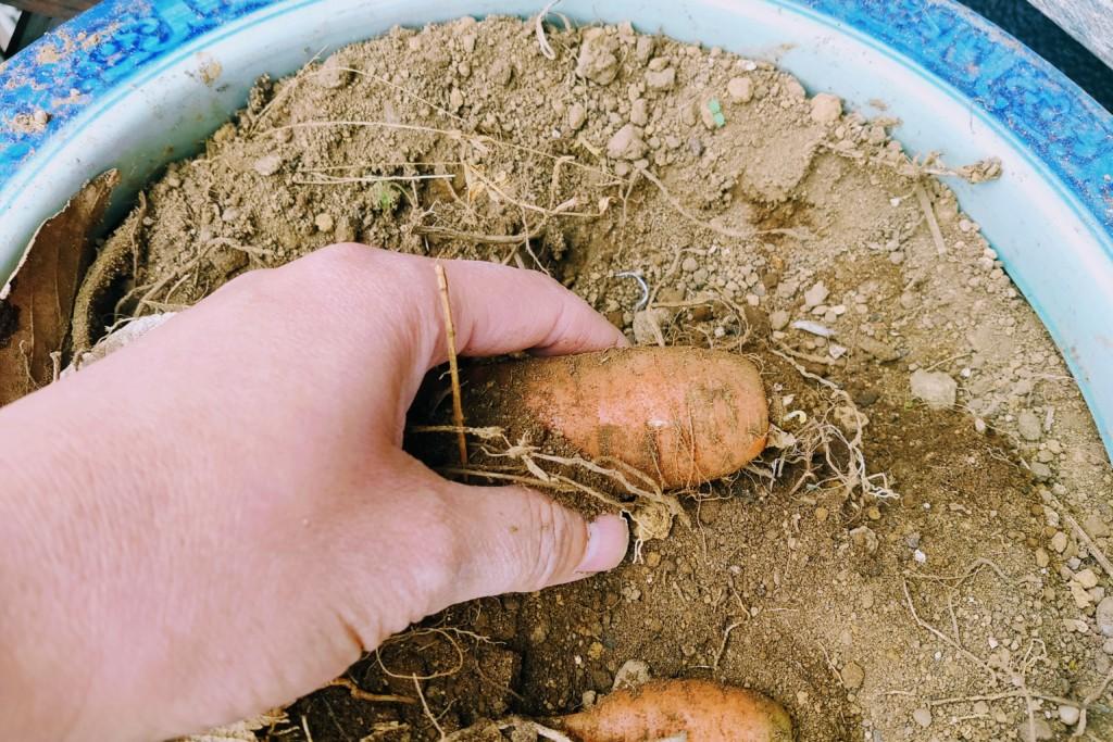 soil,nails (6)