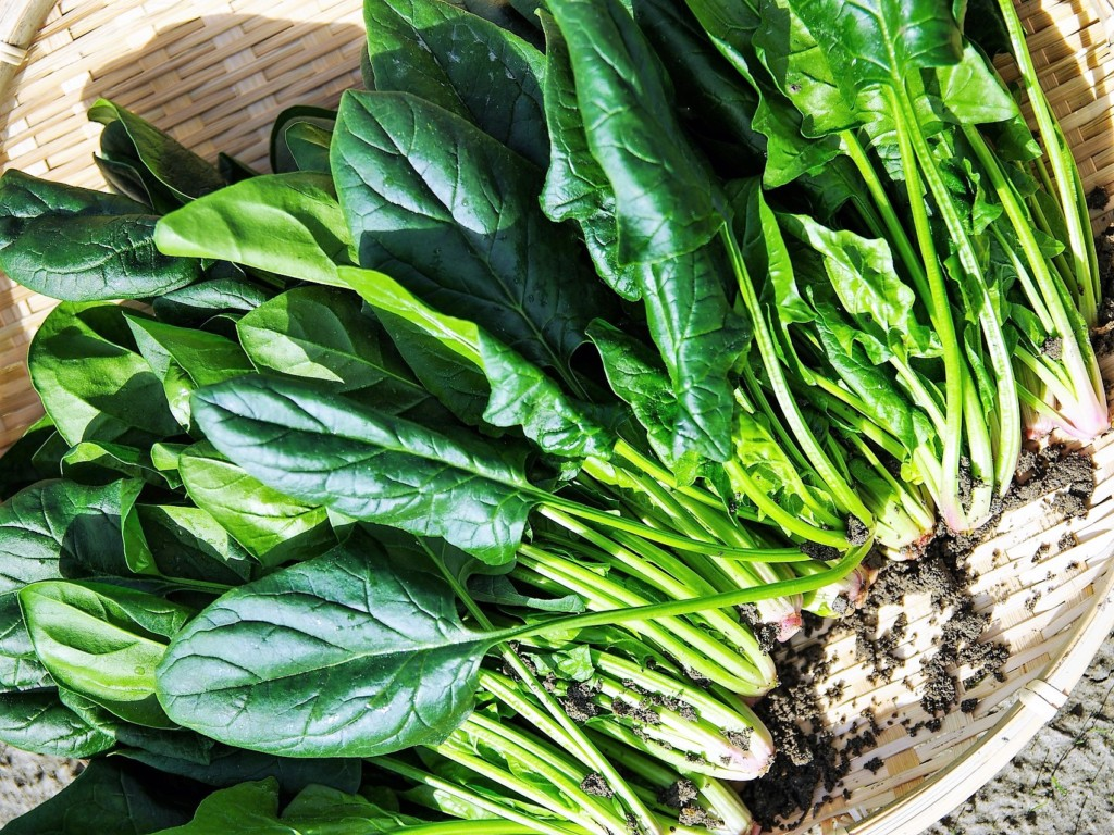 spinach,horenso (5)