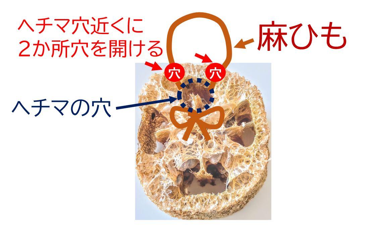 hechima,sponge-5-1