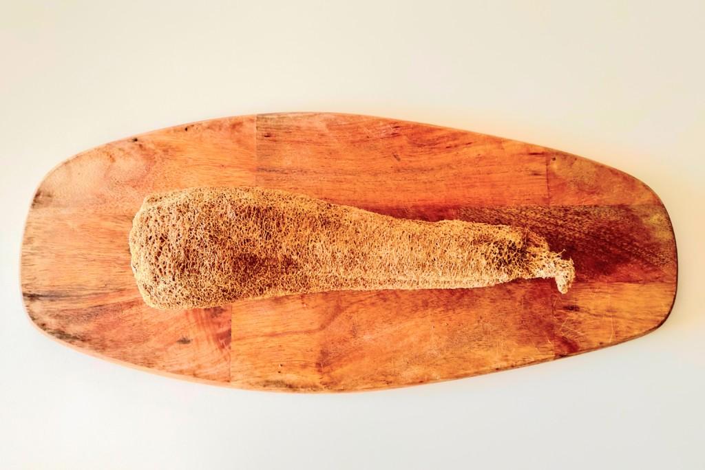 hechima,sponge