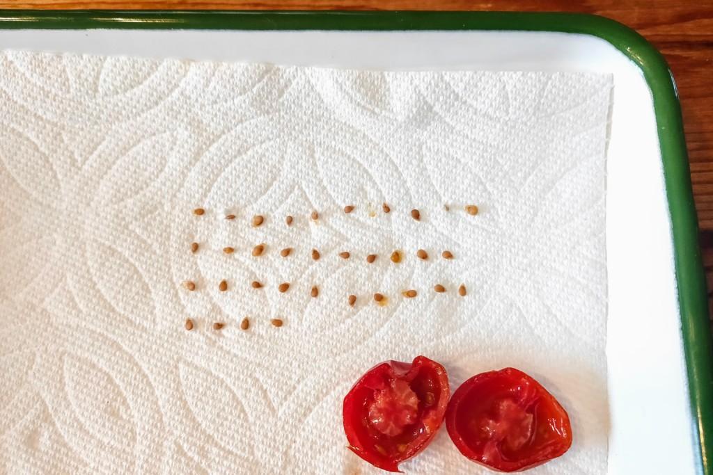 tomato-tane-torikata-10