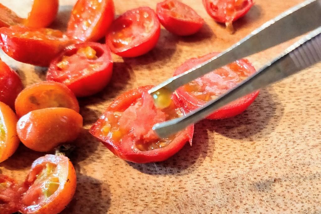 tomato-tane-torikata-3