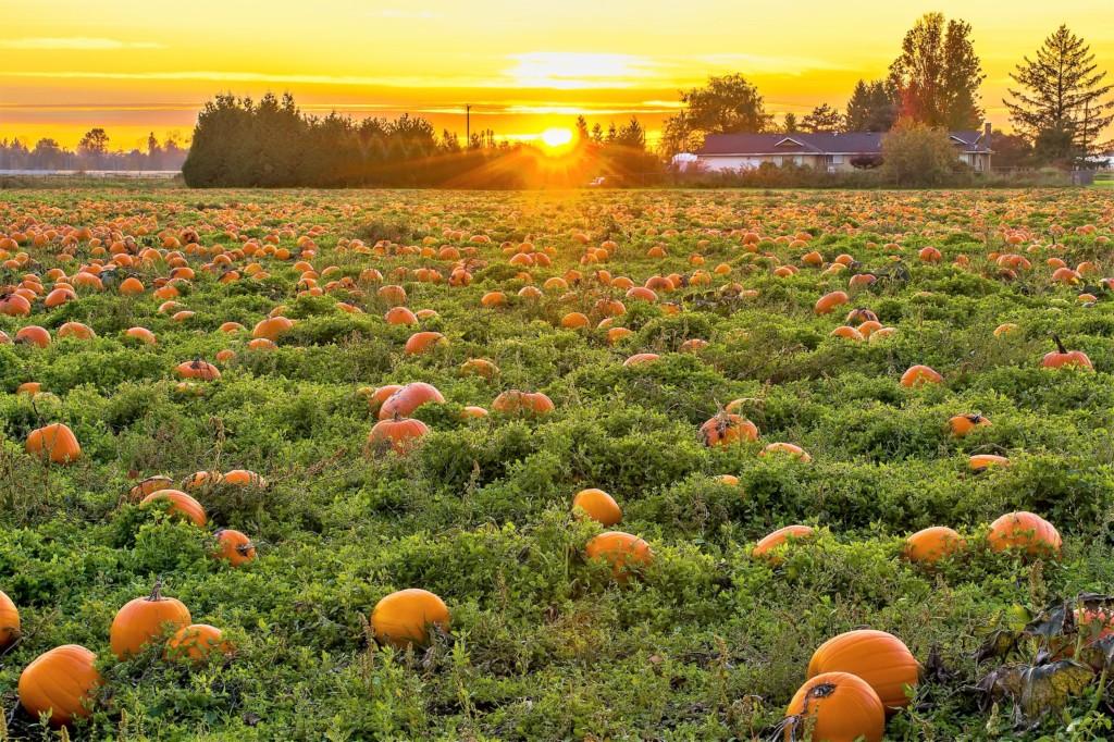 pumpkin-14