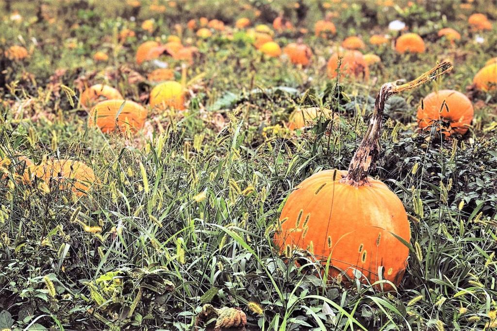 pumpkin-15