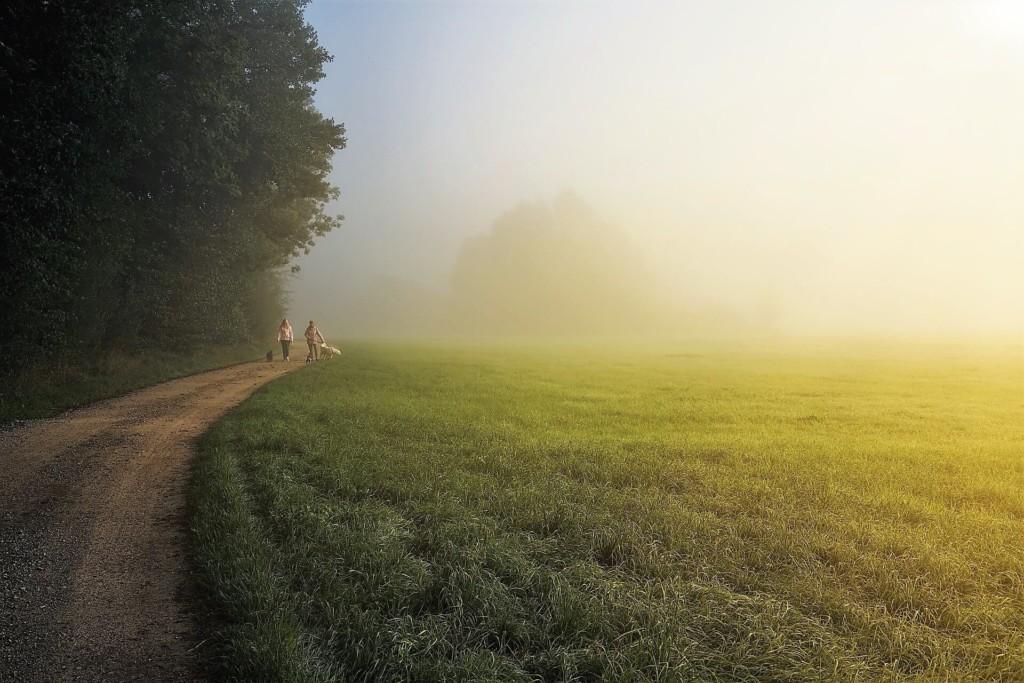 fog,kiri (★)