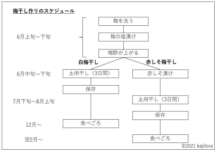 umeboshi,schedule