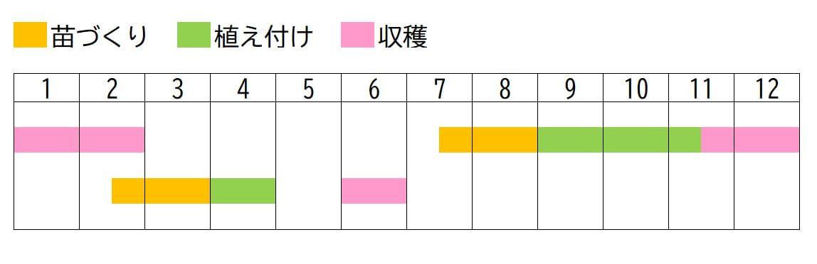 cabbage,schedule-re (★)