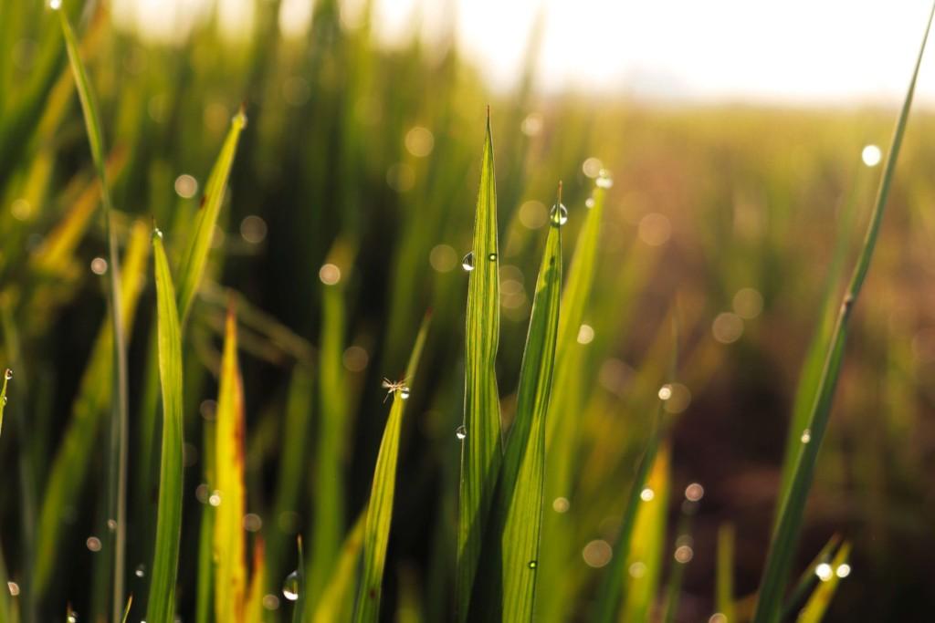 grass (★)